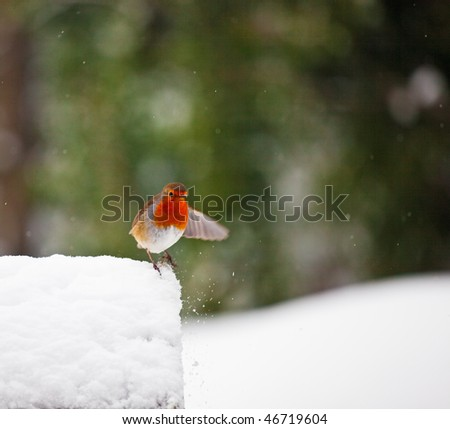 A red robin on a snowy birdhouse in winter. Robin has a wing outstretched (with motion blur) as if gesturing to something. Photo has short depth of field and space for your text. - stock photo