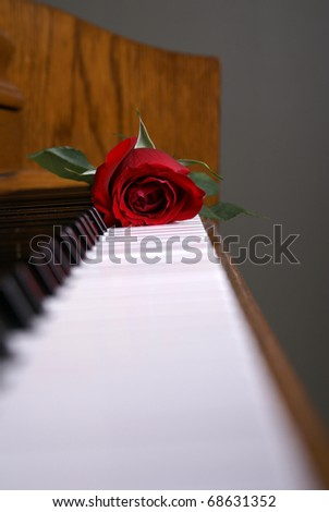 A red rose laying on the piano keys - stock photo