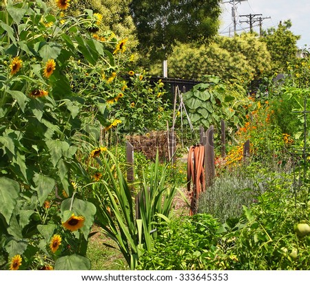 A red rubber garden hose is wrapped around it's hose hanger on a wooden post in a large urban flower and vegetable garden. - stock photo