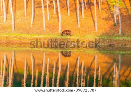 A reflection in water of a horse eating the grass in the morning with sunlight and selective focus on a horse No.2 - stock photo