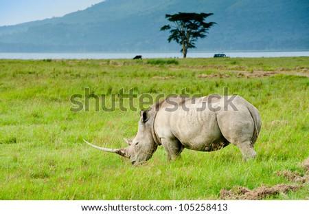 A rhino, Kenya - stock photo
