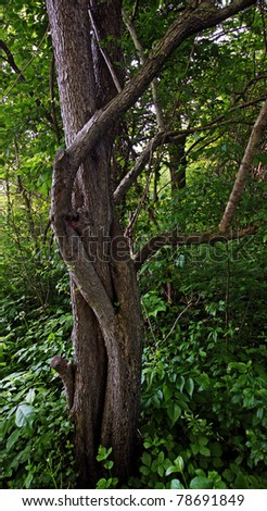 a river flowing through a forest - stock photo