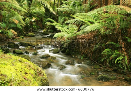 A river flows softly through lush temperate rainforest.  Treeferns, ancient eucalyptus trees, and mossy boulders complete a tranquil, pristine setting.  Victoria, Australia. - stock photo