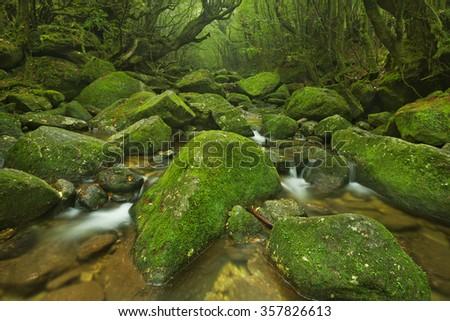 A river through lush rainforest along the Shiratani Unsuikyo trail on the southern island of Yakushima, Japan. - stock photo