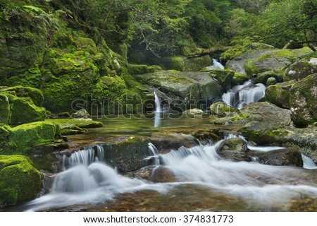A river through lush rainforest on the southern island of Yakushima, Japan. - stock photo