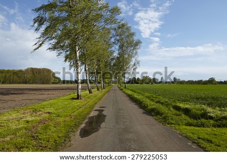A road with some birch trees and a blue sky with white clouds taken at bright sunshine. - stock photo