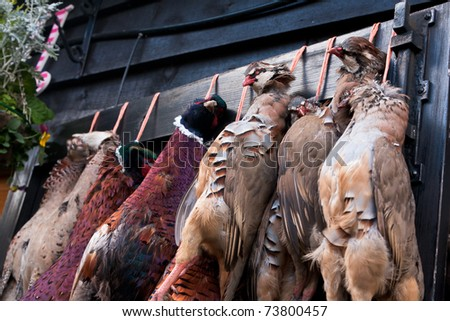 A row of pheasant carcasses hanging on a large wooden door outside the restaurant of a country pub in rural England. - stock photo