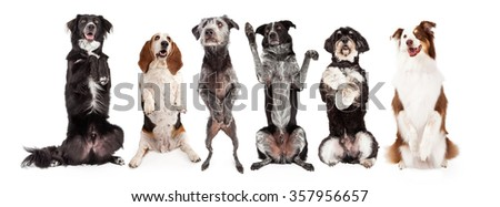 A row of six dogs together - All are sitting up and in a begging position with happy expressions. Image sized to fit a popular social media timeline cover photo placeholder. - stock photo