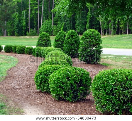 a row of well maintained and manicured shrubs and bushes - stock photo