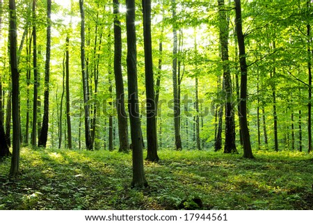 A rural road through a forest full of trees. - stock photo
