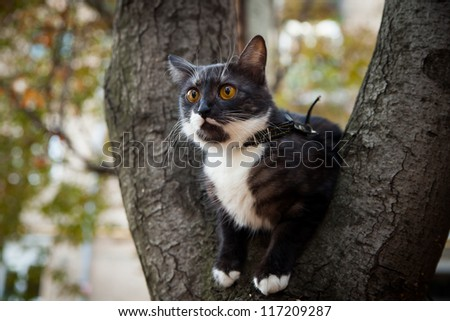 A scared cat on a tree  outdoor - stock photo