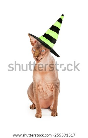 A scary hairless cat hissing and wearing a green and black Halloween witch hat - stock photo