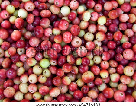 A scattering of cranberries. Photographed close-up.The berries are ripe and not ripe - stock photo