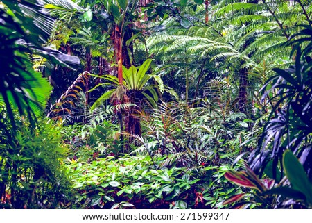 A scene looking straight into a dense tropical rain forest - stock photo