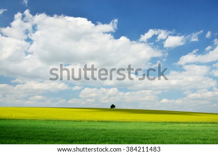 A scenery of a field of yellow rape or canola flowers, grown for the rapeseed oil crop. Spring wallpaper in slovakia - stock photo