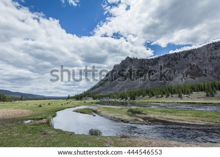 A scenic view of mountain, river, grass, a group of bisons, pine trees, and cloudy sky, in Yellowstone National Park - stock photo