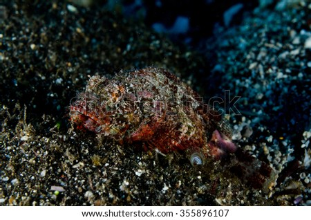 A scorpionfish camouflages itself on the volcanic seafloor on the marine reserve of Reunion Island - stock photo
