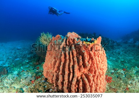 A SCUBA diver swims behind a large barrel sponge in warm, tropical waters - stock photo