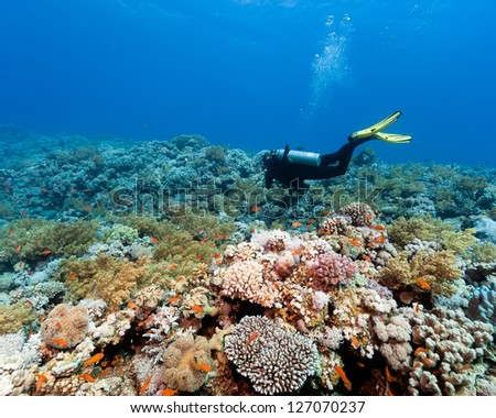 A scuba diver swims over a vibrant, colorful tropical coral reef - stock photo