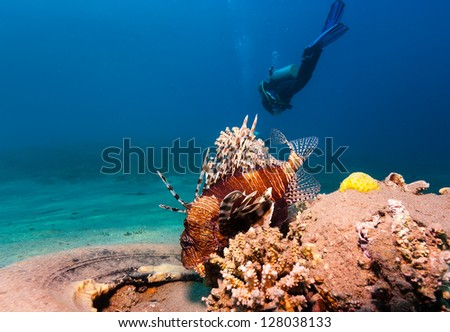 A SCUBA diver swims past a lionfish and old abandoned rubber tyre - stock photo