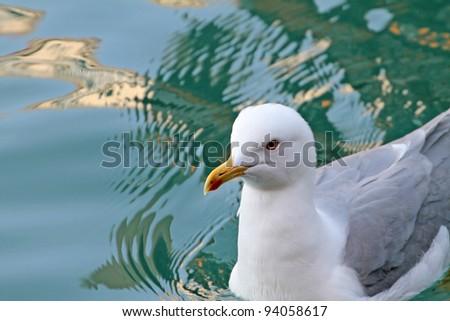A sea gull from Venice, Italy - stock photo