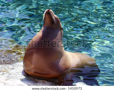 A sea lion enjoying the sun - stock photo
