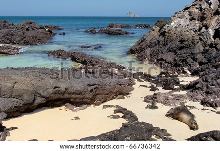 a sea lion sleeping in the sun on the beach of san cristobal, galapagos - stock photo