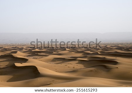 A sea of sand dunes in the Sahara desert in Erg Chegaga in Morocco front of a forest that is far in the horizon behind the mist in the spring during a hot sunny day. - stock photo