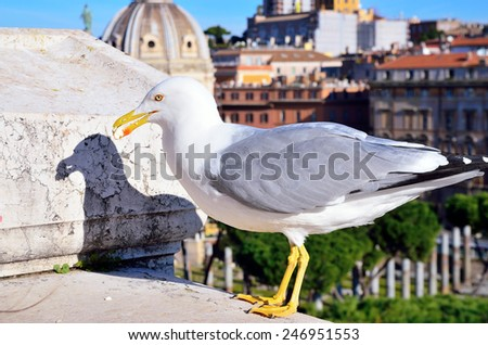 a seagull and Rome - stock photo