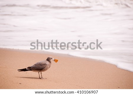 A seagull biting a cookie, on the beach/Seagull on the beach - stock photo