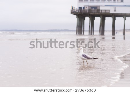 a seagull on a beach on a cloudy day, picture taken in Old Orchard Beach, Maine, USA - stock photo