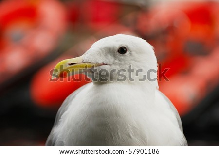 A seagull on the dock during a walk along the Waterfront area of Seattle Washington is home to several shops and Seattle Fire Dept Fire Boats on Alaska Way - stock photo