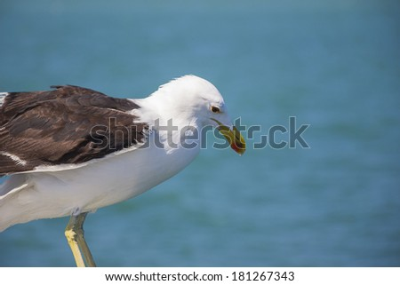 A seagull perched on the edge of a boat against the backdrop of the ocean - stock photo