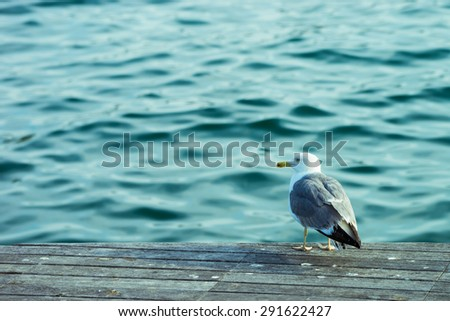 A seagull sitting on the dock in Barcelona. - stock photo