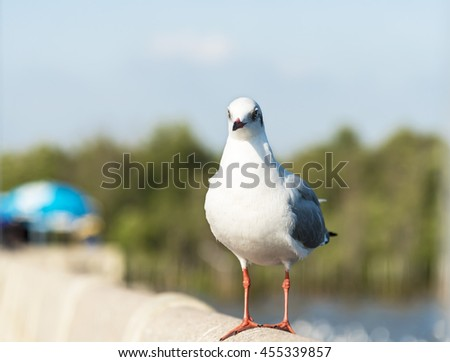 A Seagull Standing on Railing of The Bridge waiting for Food with Blue Sky and Green Tree Backgrounds. - stock photo