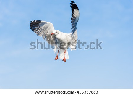A Seagull Stops in the Air Waiting for Food from People with Nice Blue Sky and Clouds for Nature Backgrounds. - stock photo