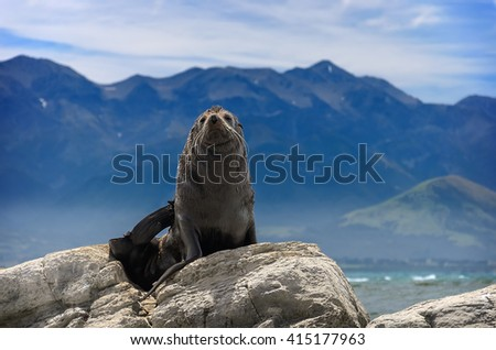A seal basks at the sun in front of Pacific ocean. Kaikoura, South Island, New Zealand - stock photo