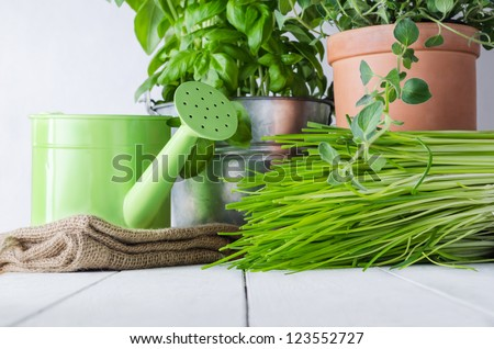 A selection of potted home grown culinary herbs on an old white painted wood table with watering can and hessian sack.  Representing kitchen scene or potting table. - stock photo