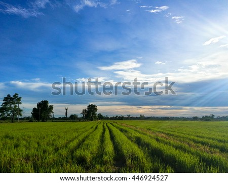 A serene and vibrant rice rice field in rural Thailand with green rice sprouts against bright, blue sky with syn rays in the background - stock photo
