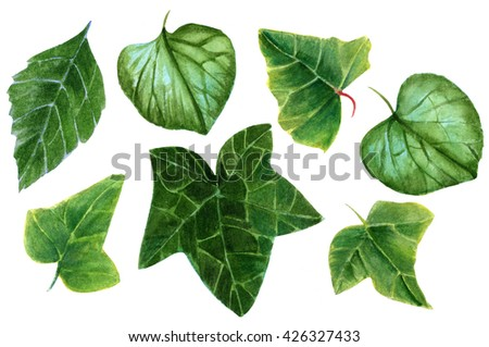 A set of hand painted watercolor leaves (ivy, brunnera, and hydrangea), on white background - stock photo