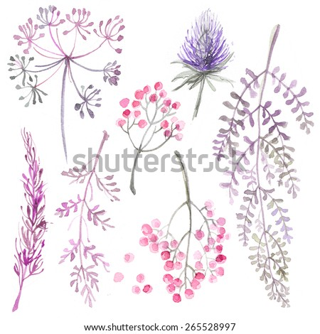 A set of herbs and flowers hand-painted watercolor. Botanical drawings. Flowers on a white background. Fern, dill, ear cotton, branches and leaves - stock photo