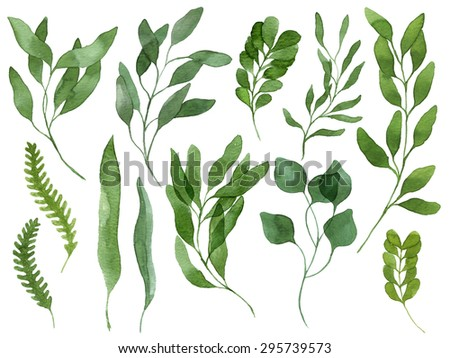 A set of watercolor leaves, berries, fern and branches. Design elements to make your own patterns, laurels and compositions. Great for wedding or invitations in floral style. Real watercolor - stock photo