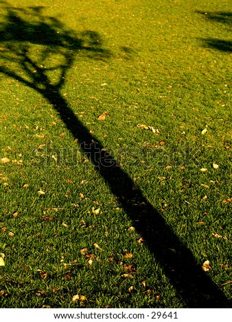 A shadow of a tree in Battery park, NYC - stock photo