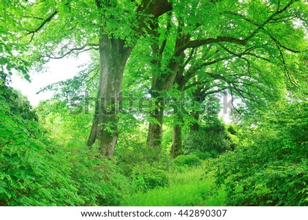 A shady glade in the forest in the English countryside. - stock photo