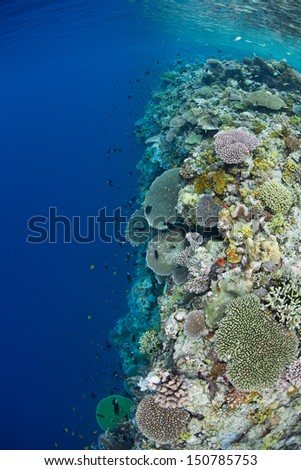 A shallow coral reef, composed of a diversity of hard and soft corals, leads to a vertical wall that drops in the abyss in the Solomon Islands.  This area is within the famous Coral Triangle. - stock photo