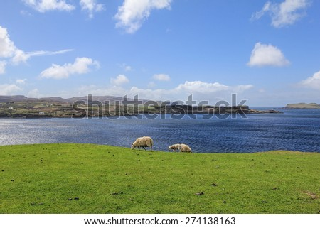 A sheep grazing with a very shallow depth of field background in Isle Of Skye, Scotland - stock photo