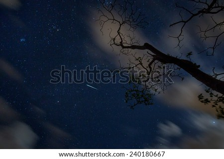 A shooting star during a meter shower with backlit tree branches by passing clouds - stock photo