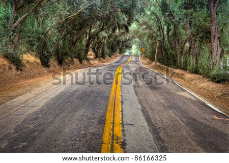 A shot of an old country road lined with green trees. - stock photo