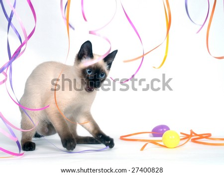 A siamese kitten on a white background playing with streamers - stock photo