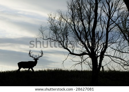 A silhouette of a bull elk - stock photo